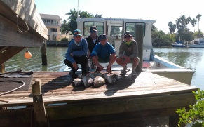 gag-grouper-success