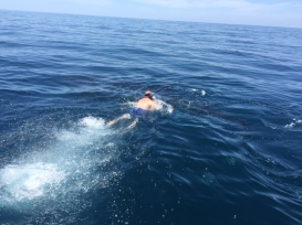 ron-pauley-swimming-with-the-whale-sharks